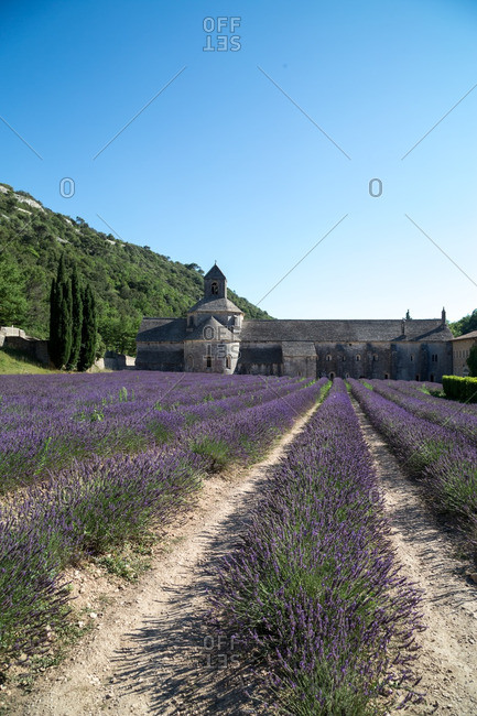 Abbey and field of lavender, France