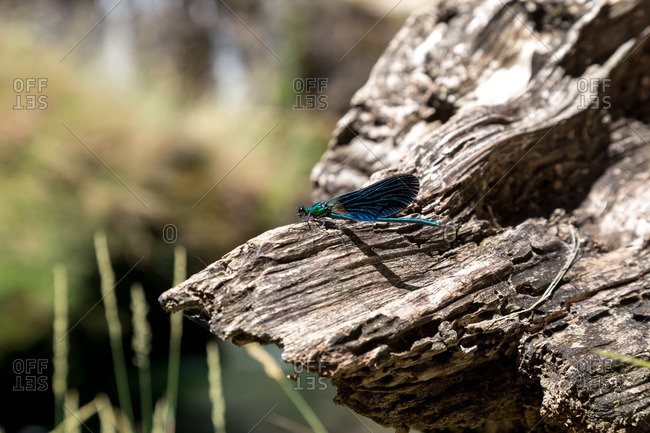 A dragonfly perched on rock