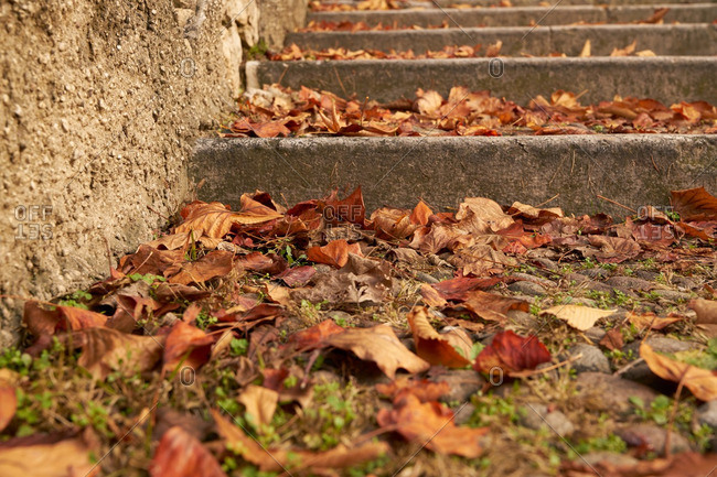 Fallen leaves on old steps