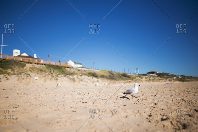 Seagull walking on a beach