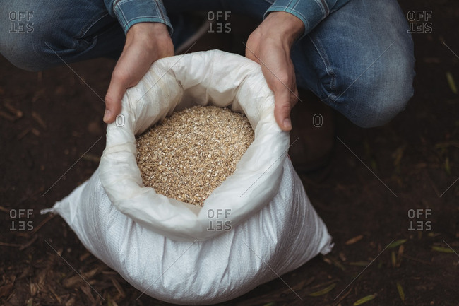 Hand holding a sack of barley to prepare beer at home brewery