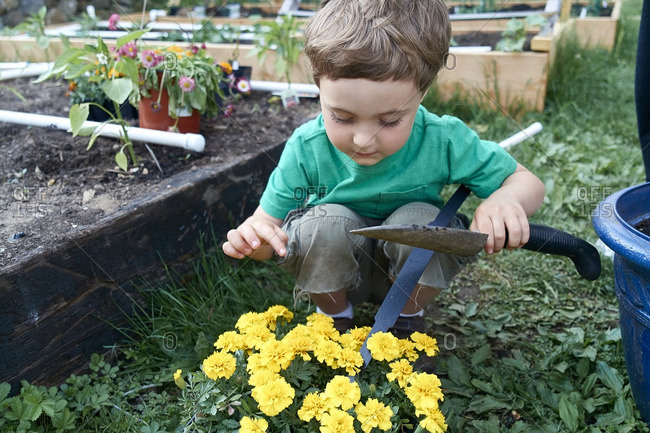 Boy helping plant flowers in a garden