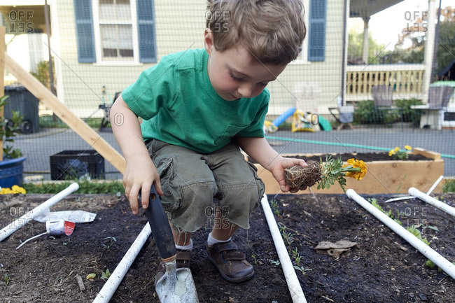Boy helping plant flowers in a raised bed garden
