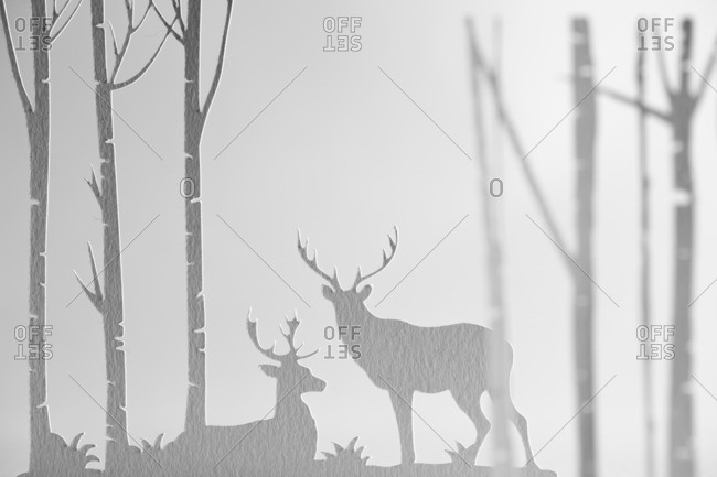 Two bucks in a forest