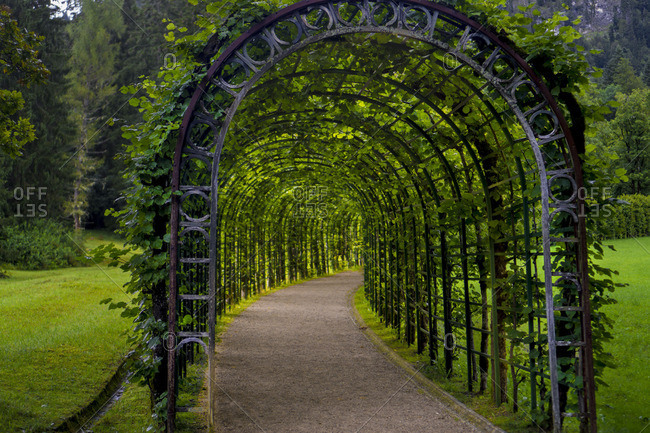 Pathway through metal, ivy-covered trellises