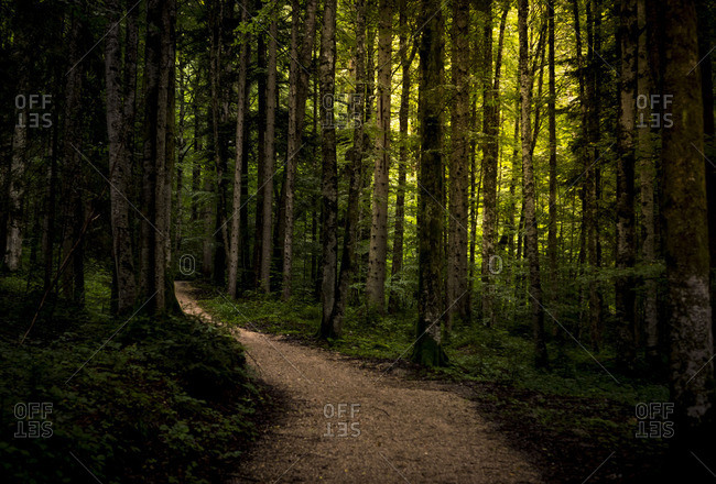 Path in a dense green forest