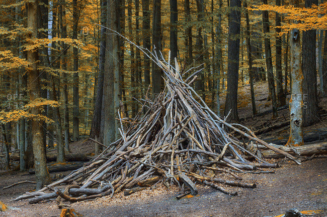 Pile of sticks gathered in a forest