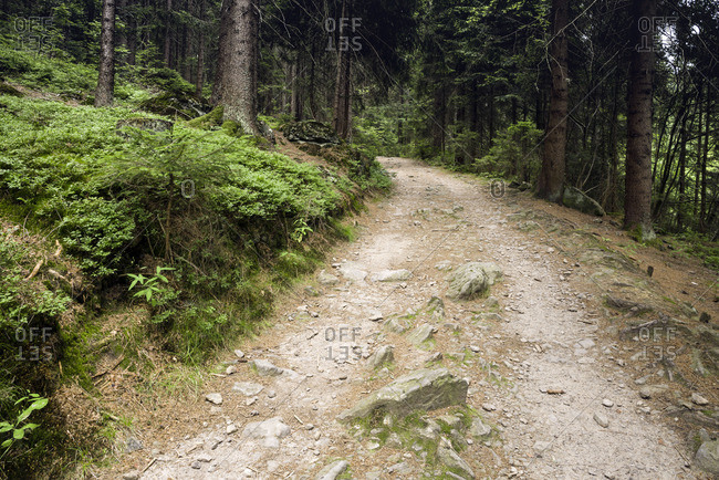 Hiking trail in the Bavarian Forest, Germany