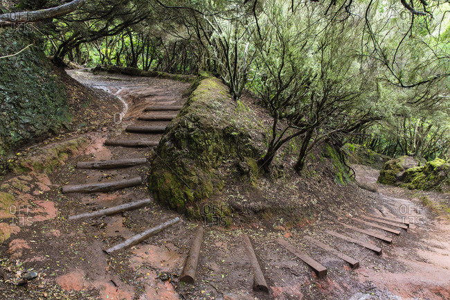 Wooden steps curving downhill on a forest hiking path