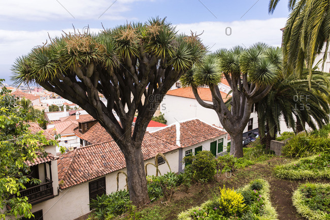 Palm trees on a hill overlooking houses with tile rooftops
