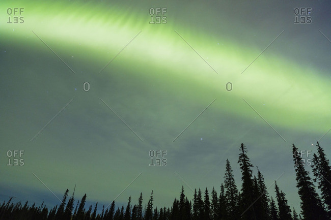 Northern lights in the night sky above a forest