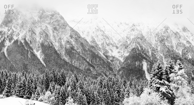 Mountain peaks and an evergreen forest covered in snow