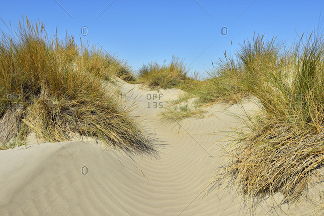 Ripples between beach grass on a sand dune