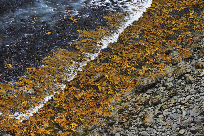 Waves rippling over seaweed on a stone beach
