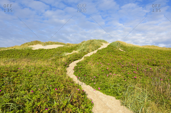 Sandy path cutting through dune vegetation to a beach at Thorsminde, Denmark