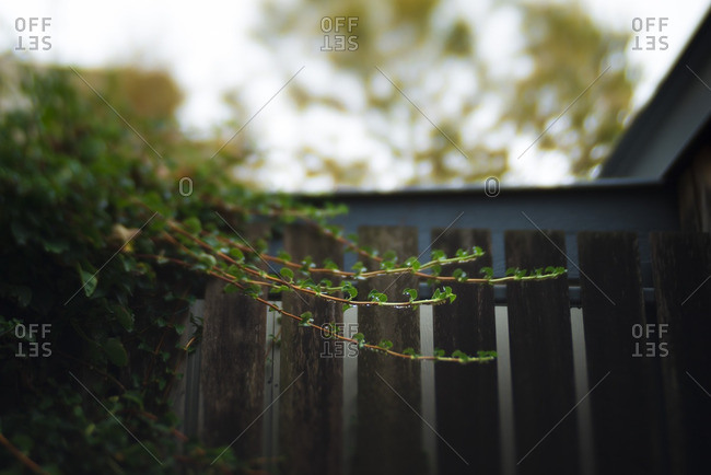 Plant growing beside a fence