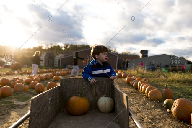 Boy standing by cart with pumpkins on a farm