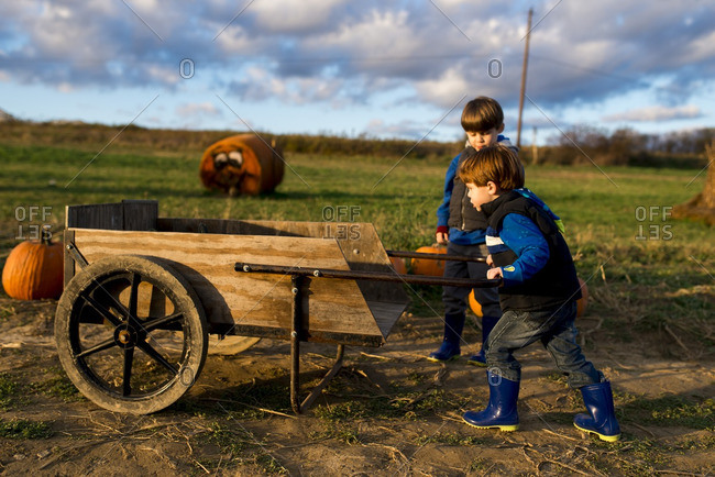 Little boy pushing a cart with pumpkins on a farm