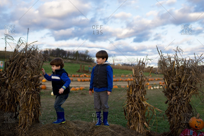 Boys standing on bales of hay by cornstalks on a farm