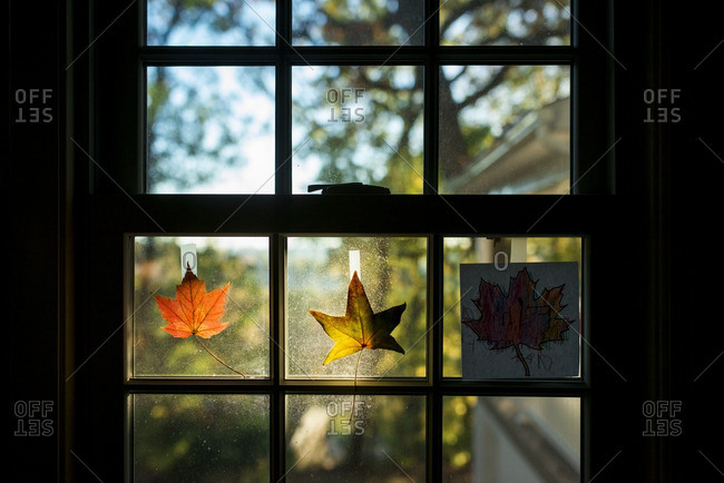 Colorful leaves taped to a window in autumn