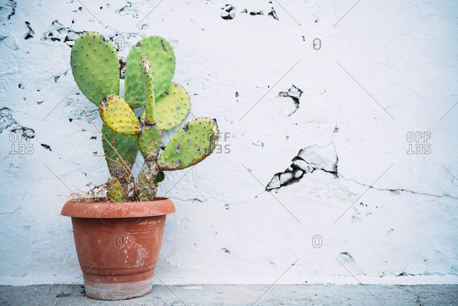 Cactus in front of cracked wall