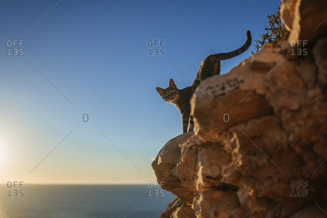 Cat walking down rocks at the sea
