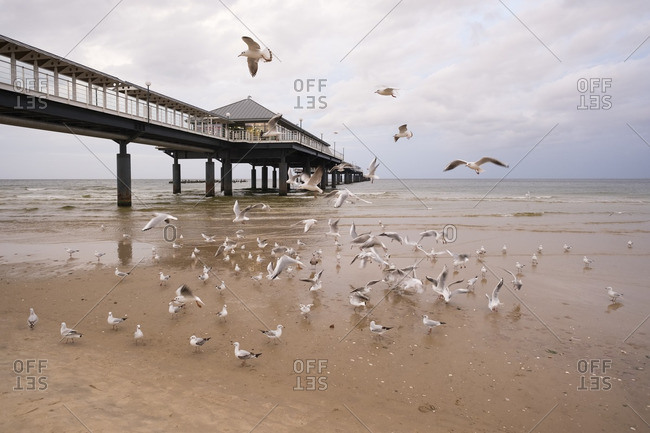 Seagulls at pier