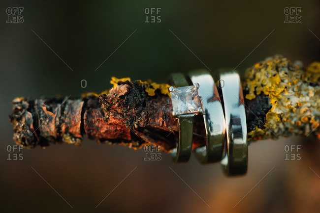Wedding bands on a branch outdoors