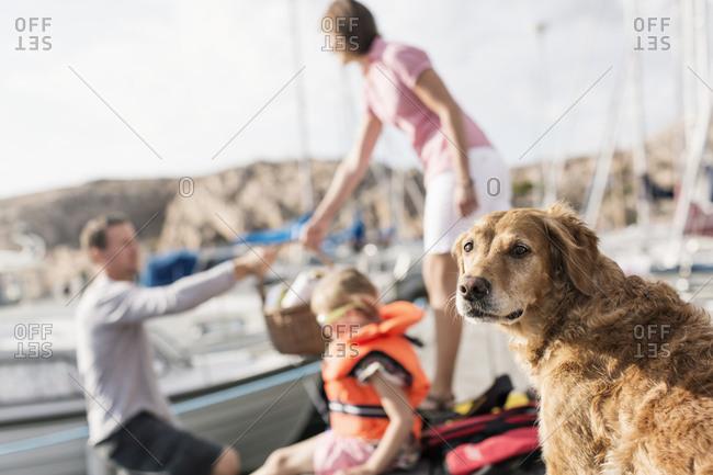 Golden Retriever against family in background at harbor