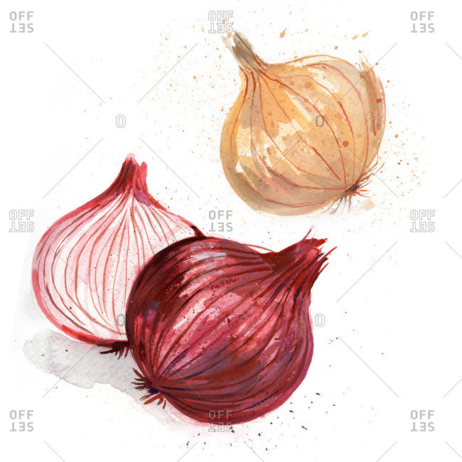 Red and white onions on a white background