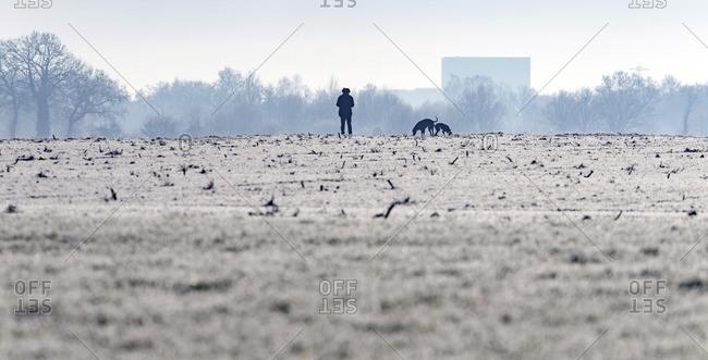 Man walking the dogs in dutch rural winter landscape. Geesteren. Achterhoek. Gelderland. The Netherlands.