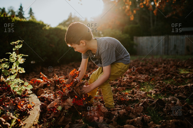 Boy playing in a pile of autumn leaves
