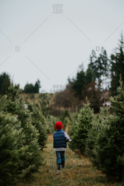 Boy walking between evergreens on a tree farm