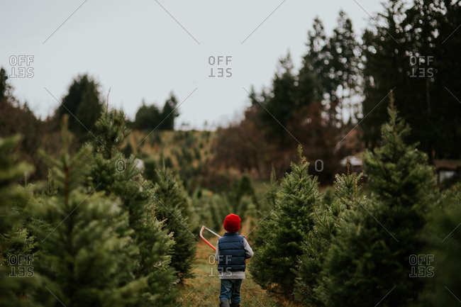 Boy carrying a saw between rows of evergreens on a tree farm