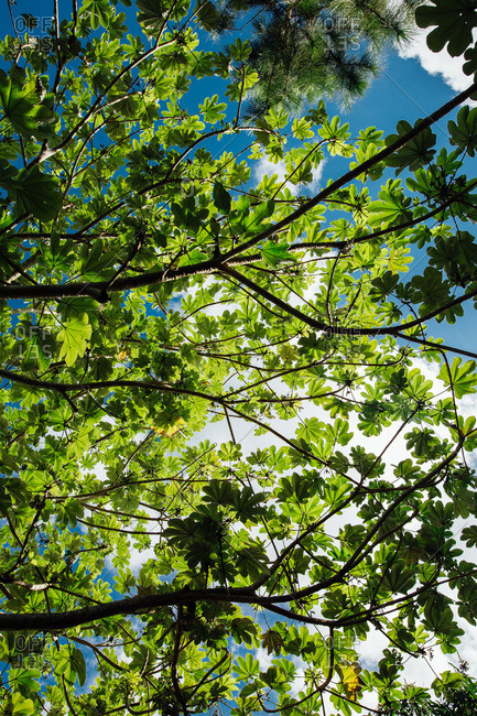 Looking up at the sky through branches of tree