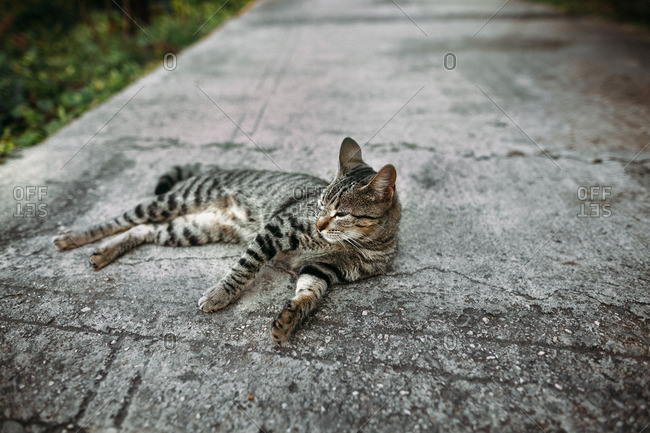Gray tabby cat lounging on sidewalk