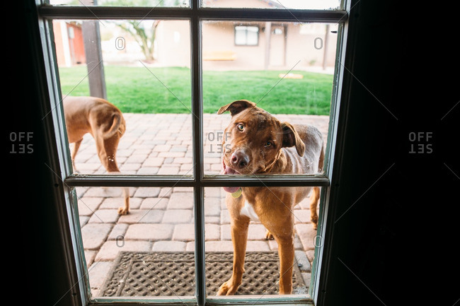 Dog with tilted head looking in door to house