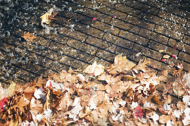 Water over bricks with fallen leaves