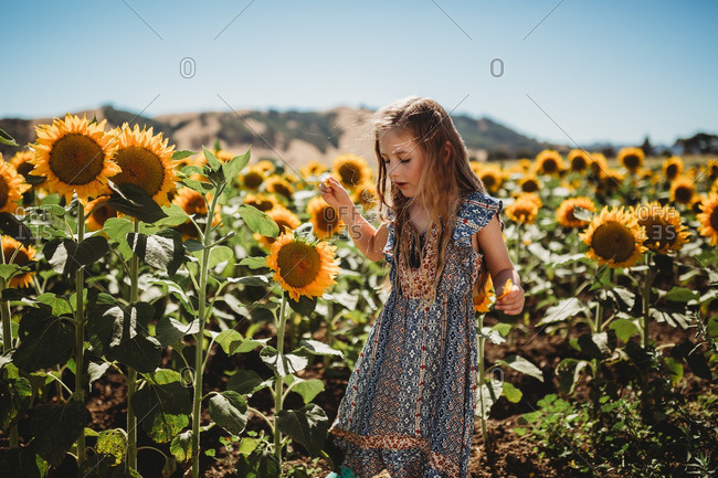 Girl wearing dress standing in field of sunflowers