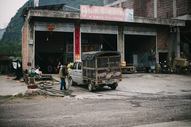 Guangdong Province, China - November 4, 2015: Driver with truck of pigs