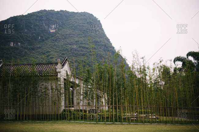 Bamboo grove by building near mountains
