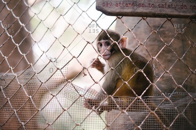 A monkey behind a fence