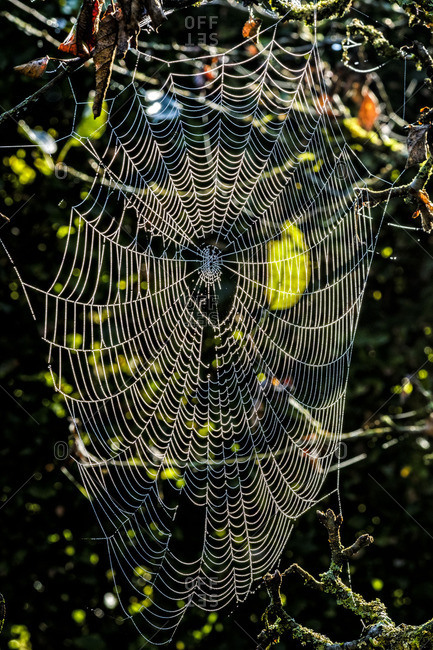 Spider web in the morning light