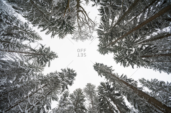 Low angle view of trees in Bavarian Forest National Park