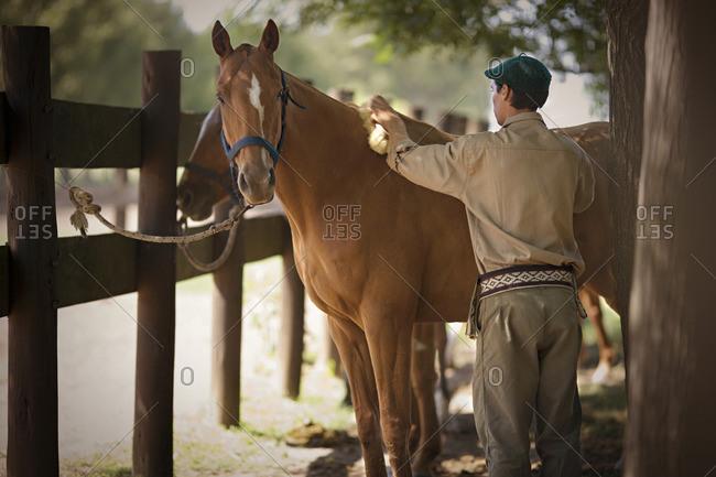 Man brushing his horse's coat