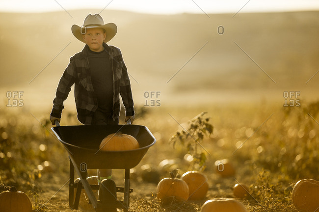 Young man with a pumpkin in a wheelbarrow