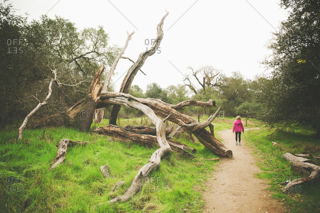 Young girl walking on path next to fallen tree