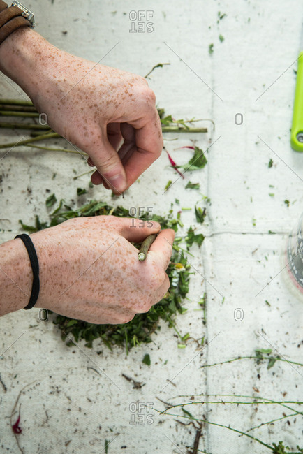 Hand removing leaves from fresh herbs