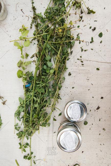 Fresh herb leaves by jars