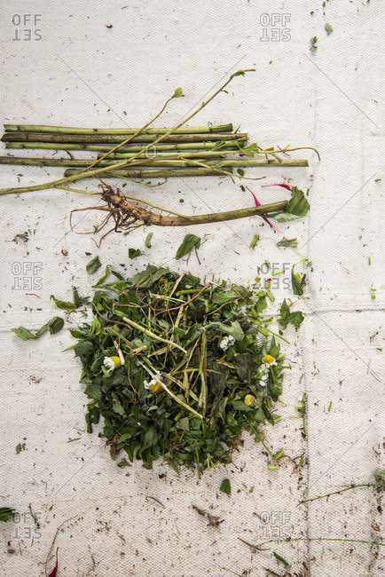Fresh herb leaves in pile